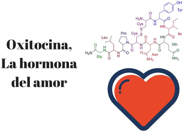 Resultado de imagen de oxitocina
